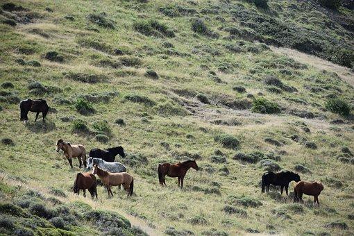 Patagonia, Torres Del Paine, National Park, Wild Horses