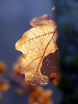 Leaf, Winter, Frost, Season, Foliage, Tree, Cold