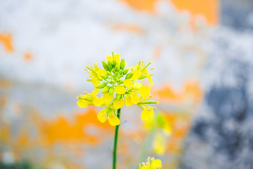 Flower, Micro, Closeup, Yellow, Nature, Depth Of Field