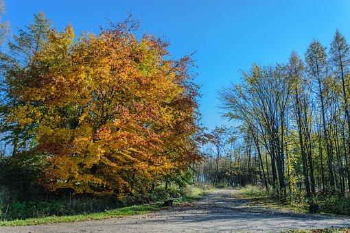 Autumn, Tree, Park, Sky, Way, Landscape, Blue, Foliage