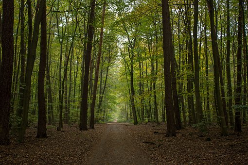 Autumn, Forest, Forest Path, Beech Wood, Mood, Nature