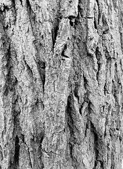 Bark, Forest, Tree, Log, Wood, Background, Rustic