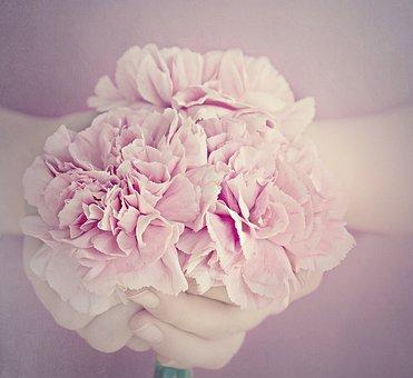 Flowers, Cloves, Pink, Petals, Carnation Pink