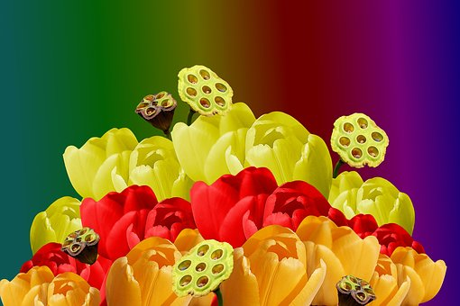 The Background, Flowers, Colored, Tulips, Colorful