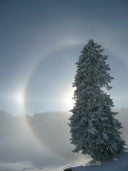 Halo, Sun, Light, Sunbeam, Fir Tree, Tree, Light Effect
