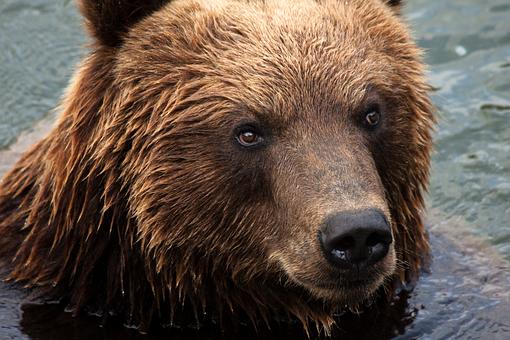 Zoom Gelsenkirchen, Gelsenkirchen, Animal, Bear