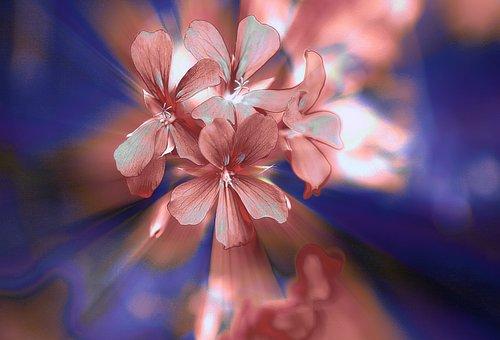 Flowers, A Small Bunch, Geranium