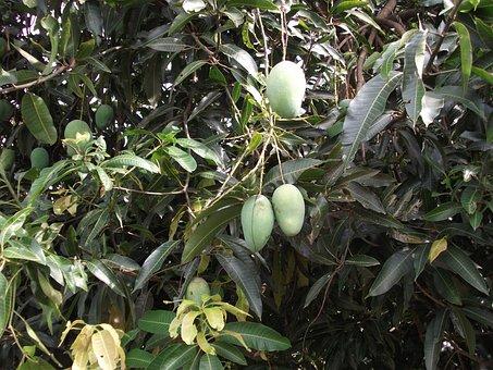 The Mango Tree, Held At The Four Seasons