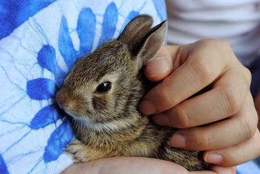 Bunny, Baby Bunny, Baby Rabbit, Brown, Hands, Held