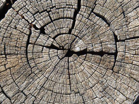 Trunk, Section, Wood, Worn, Growth Rings, Almond Tree