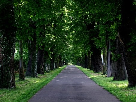 Avenue, Trees, Road, Nature, Green, Large Trees, Plant