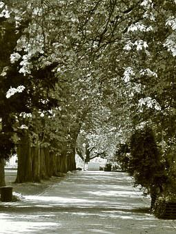 Rest, Avenue, Trees, Away, Nature, Tree Lined Avenue
