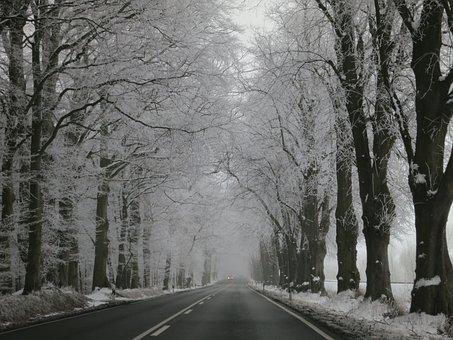 Winter, Avenue, Snow, Away, Wintry, Snowy, Trees
