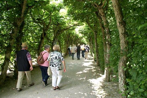 Avenue, Trees, Personal, Mci-ride, Hiking, Walk, Away