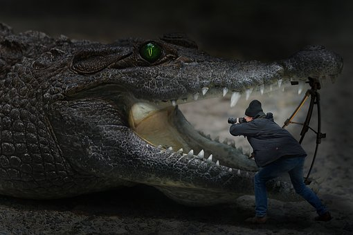 Photomontage, Composing, Fun, Crocodile, Photographer