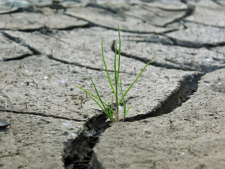 Grass, Plaice, Dry, Green, Drought, Cracks, Field