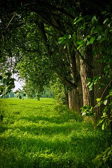 Landscape, Nature, Forest, Green, Meadow, Trees, Leaves