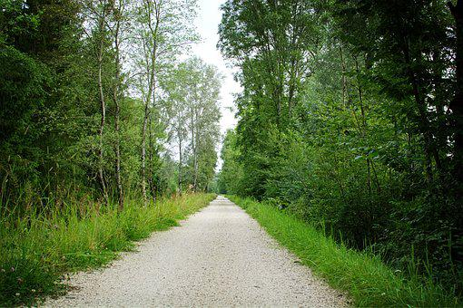 Away, Lane, Landscape Way, Forest Path, Nature, Green