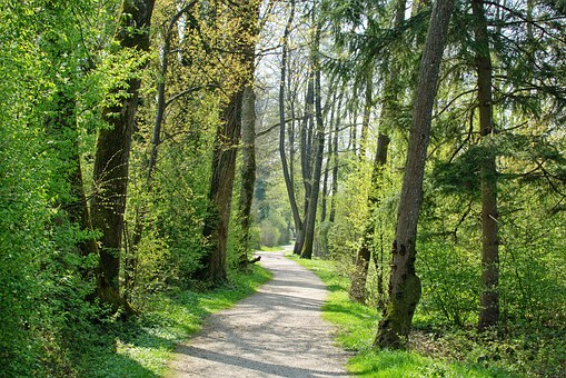 Spring, Away, Trees, Nature, Forest, Avenue, Green