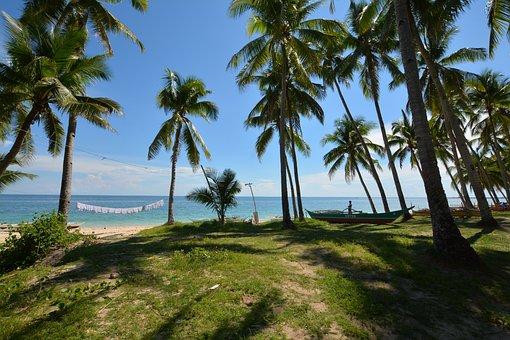 Sea, Palm Trees, Beach, Holiday, Island, Coast