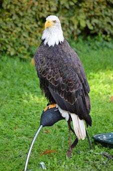 Eagle, Bird, Hunting, Raptor, Feather, Symbol, Wing