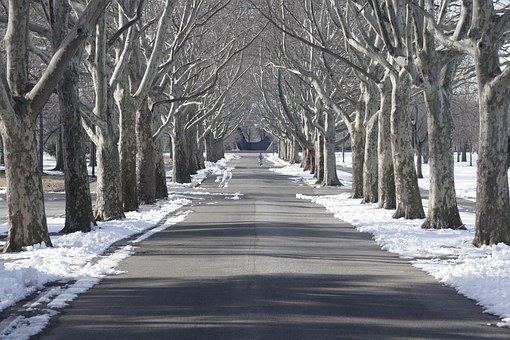 Tree Lined, Flushing Meadow Park, Snow, New York City