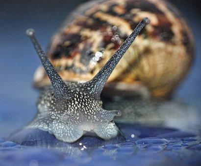 Snail, Macro, Curious, Garden, Nature, Spiral, Slime