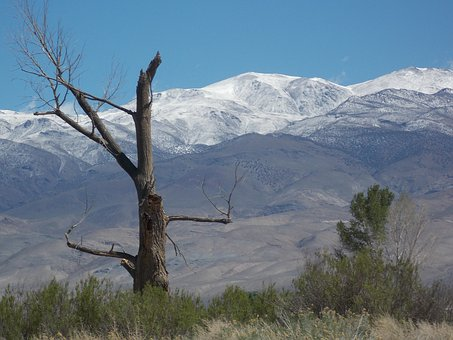 Snag, Tree, Landscape, Mountains, Snow Line, California