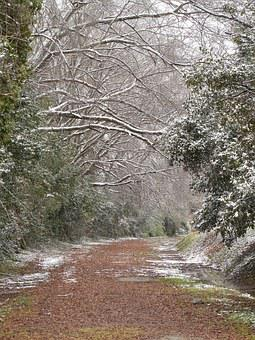 Winter, Weather, Cold, Snow, Nature, Forest, Season