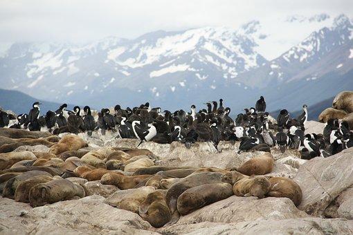 Seals, Sea Lions, Animals, Zoology, Species