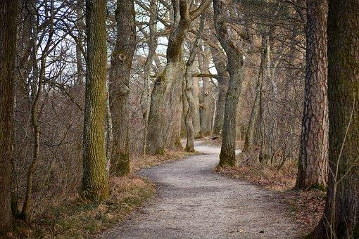 Away, Avenue, Trees, Oak, Nature, Tree Lined Avenue