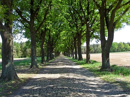 Historical Road, Verden Of All, Avenue, Trees