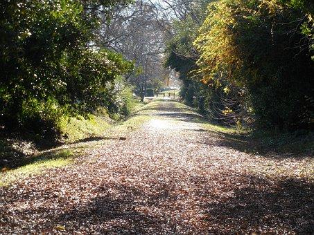 Walking Trail, Bicycle Path, Path, Trail, Bicycle, Bike