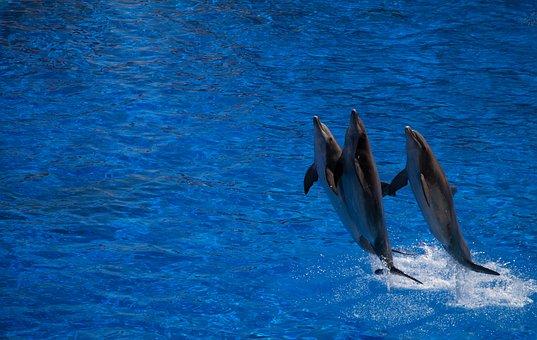 Dolphin, Cetacean, Water, Jump, Blue, Whirlpool