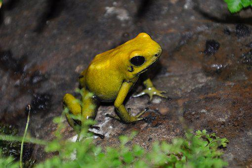 Frog, Yellow, Nature, Terrarium, Legs, Wet, Water
