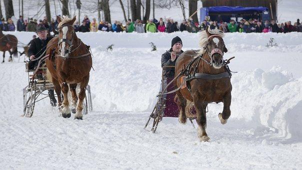 Horse, Winter, Snow, Horses, Nature, Animal