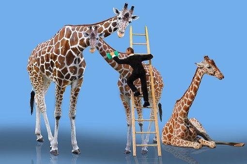 Animals, Giraffe, Care, Cleaning, Head, Male Nurse