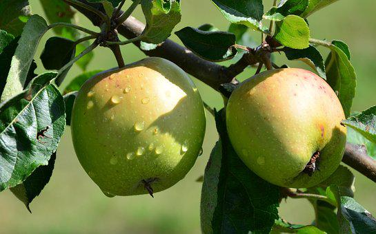 Apple, Drip, Nature, Fruit
