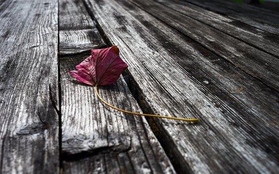 Autumn, Leaf, Leaves, Wood, Table, Grain, Mood