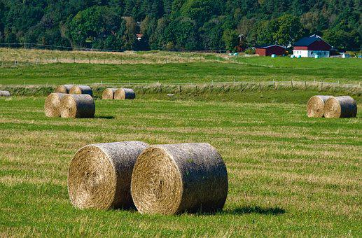 Farmhouse, Rural, Nature, Hay, Feed, Bed, Harvest