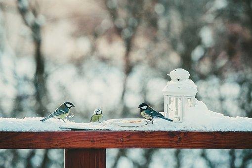 Birds, Bird, Colors, Feather, Natur, Wings, Animals