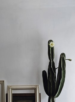 Blooming, Blossom, Blossoming, Botanical, Botany, Cacti
