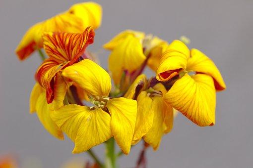 Flower, Yellow, Petals, Bud, Pistens, Iris