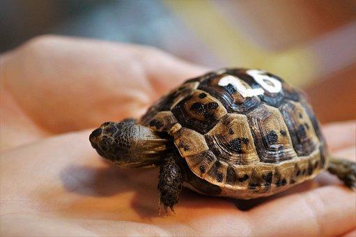 Cub, Turtle, Little Turtle, Vivarium, Tan, Registration