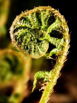 Flower, Bracken, Fern, Green, Nature, Sheet, Foliage