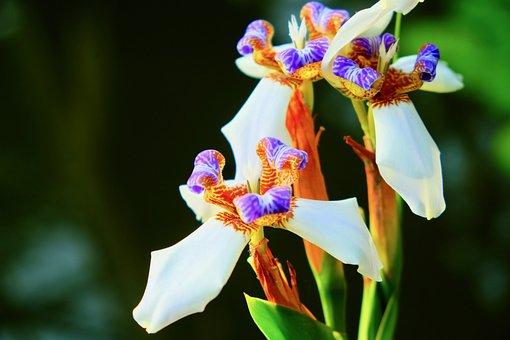 Flower, Colorful, Rainforest, Beautiful, Swamp, Bloom