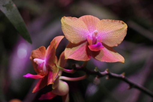 Orchid, Flower Garden, Flowers, Nature, Pink, Garden