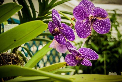 Flower, Flowers, Flora, Nature, Plant, Plants
