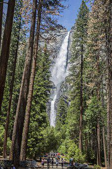 Waterfall, Sequoia, Trees, Mountain, Forest, Redwoods