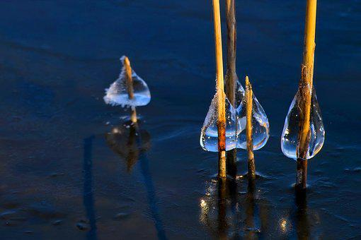 Impression, Nature, Ice, Frost, Winter, Close Up, Reed